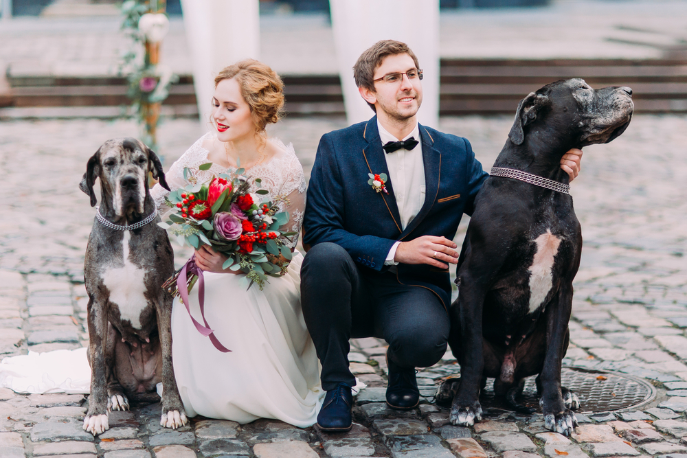Aisle Perfect Submissions- Bride and Groom with Dogs