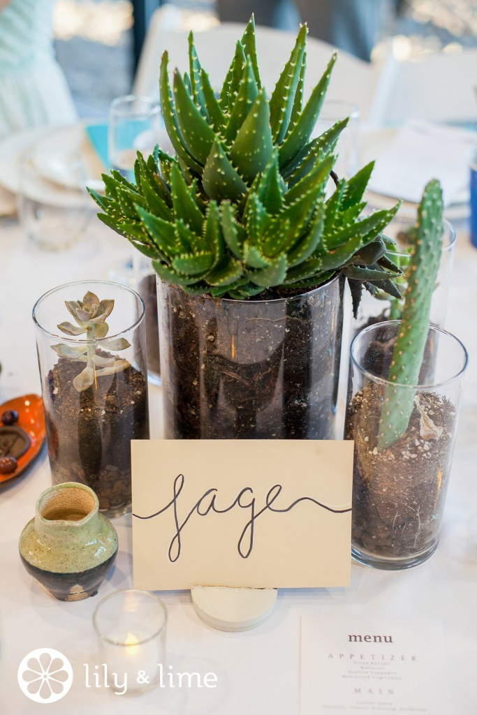 Wedding decor on a budget