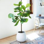 fiddle leaf tree from west elm artificial best indoor plant ideas